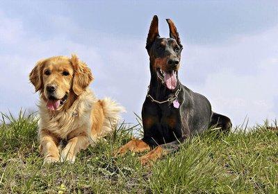 chiens-de-race-2.png