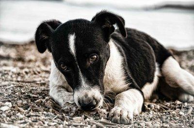 einsamer-vermisster-hund.jpg