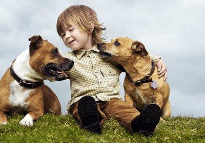 enfant-chiens.png
